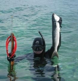 Spearfishing with a speargun