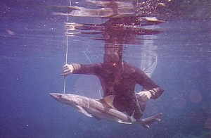 bottom-spearfishing-1